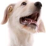 dog training naples florida